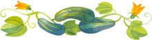 Green Vegetable Marrows Surrounded By Swirly Vines With Green Leaves And Yellow Flowers, Watercolor Illustration