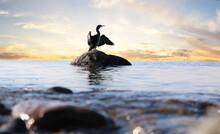 Kormoran Auf Einem Stein Im Meer Bei Sonnenaufgang.