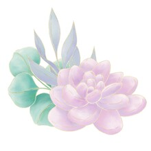 Simple Composition, Illustration, Pink Succulents Decorated With Blue And Green Twigs With Leaves