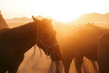Horses In Countryside On Sunny Day