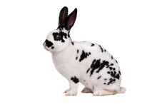 Spotted Bunny Isolated On White Background