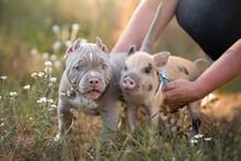 Puppy And Piglet In The Garden