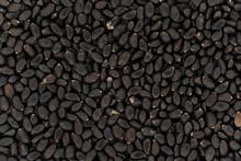 Dark Tukmaria Or Thai Basil - Ocimum Basilicum - Seeds Under Microscope, Image Width 23mm