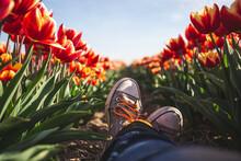 Germany, Woman's Feet In A Tulip Field