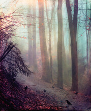 Crows On Forest Path In Autumn, Daybreak