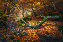 Spain, Province Of Leon, Cinera, Stream Flowing In Autumn Forest Covered In Fallen Leaves