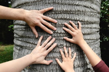 Four Hands Touching A Tree Trunk