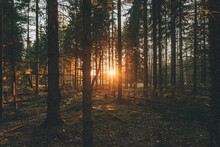 Sunset In The Woods Of Sodermanland, Nykoping, Sweden