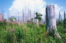 Germany, Bavaria, Tree Stump Standing In Springtime Meadow