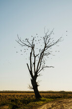 Flock Of Birds Flying By Bare Tree In Field Against Sky At Ebro Delta, Spain