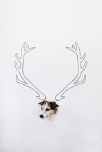 Portrait Of Mongrel With Drawn Deer Antler On White Ground