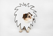 Little Dog With Drawn Lion's Mane