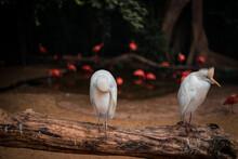 Pássaros No Tronco De Madeira No Parque Das Aves, Foz Do Iguaçu
