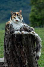 Gato No Tronco