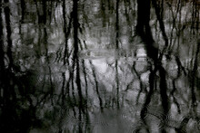 Reflection Of Bare Trees On Water Surface At Rainy Day