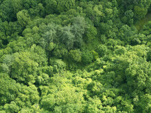 Aerial View Of Green Lush Forest