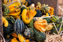 Display Of Colorful Pumpkins And Squash For Sale