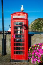 UK, England, Devon, Ilfracombe, Seagull Sitting On A British Telephone Booth