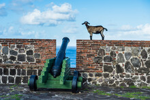 Caribbean, Netherland Antilles, St. Eustatius, Statia, Fort Oranje, Goats Walking Above Old Cannons
