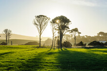Backlight Of Trees In Green Fields, The Catlins, South Island, New Zealand