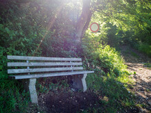 Empty Bench Along Forest Trail