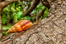 Democratic Republic Of Congo, Close-up Of Snail Crawling On Tree Trunk