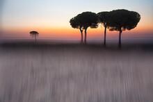 Silhouettes Of Trees In Lagunas De Villafafila Nature Reserve At Sunset