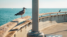 USA, California, Los Angeles, Seagull And Dove On The Pier Of Venice