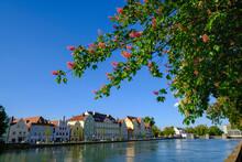 Blossoming Chestnut Tree, View Towards Mill Island, Isar, Landshut, Bavaria, Germany