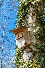 Germany, Low Angle View Of Birdhouse Hanging On Tree Trunk In Spring