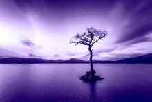 Great Britain, Scotland, Loch Lomond, Milarrochy Bay, Lone Tree