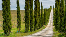 Italy, Tuscany, Country Lane With Cypresses