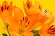 canvas print picture - Feuerlilien auf gelb