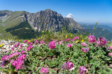 Italy, Wildflowers Blooming In Sibillini Mountains With Mount Bove In Background