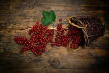 Ripe Red Currant Berries Spilling From Small Wicker Basket