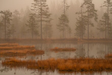 Finish Swamp In The Early Morning Mist