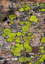Austria, Vorarlberg, Map Lichen On Rock