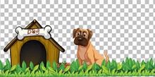 Boxer Dog With Dog House On Transparent Background