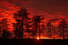 Red Sunset Over The Finish Taiga