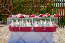 Cages With White Doves Prepared For Wedding Celebration