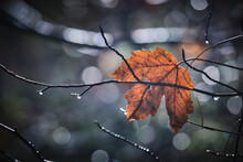 Tree Branch With Single Leaf In Autumn