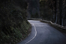Empty Asphalt Road In Forest