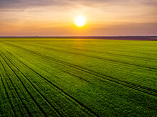 Aerial View Of Vast Green Wheat Field At Sunset