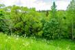 kiepojcice las drzewa puszcza łąka wiosna lato