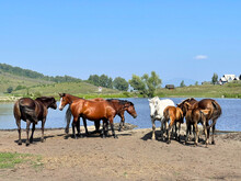 Herd Of Horses Standing By The Lake