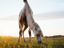 Camel In The Field Green Field Landscape Nature Mammal