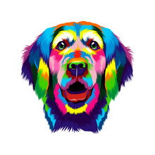 Portrait Of The Head Of A Golden Retriever From Multicolored Paints. Splash Of Watercolor, Colored Drawing, Realistic. Vector Illustration Of Paints