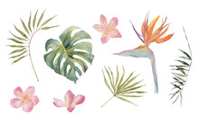 Strelitzia, Plumeria, Monstera, Palm Leaves. Tropical Jungle Plants. Watercolor Hand Drawn Colorful Set. Object Isolated On White Background. For Textile, Design, Backgrounds.
