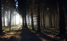 Enlighten Forest