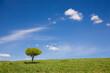 Samotne drzewo na tle błękitnego nieba.